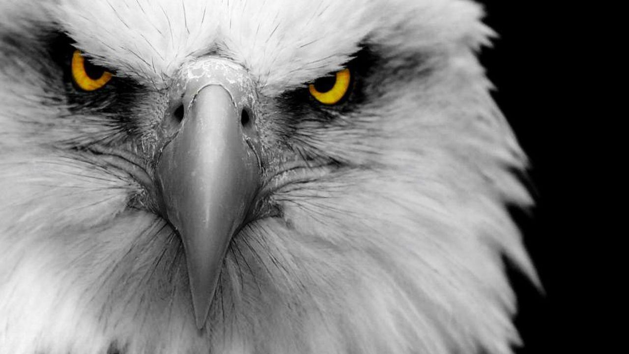 Der Adler des Unheils